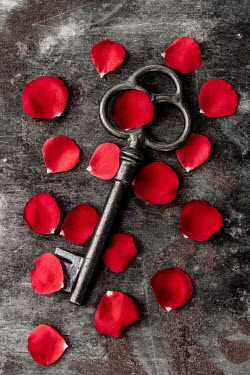 Des Panteva SCATTERED ROSE PETALS AND ANTIQUE KEY Miscellaneous Objects