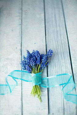 Svetlana Bekyarova BLUE FLOWERS WITH RIBBON ON TABLE Flowers