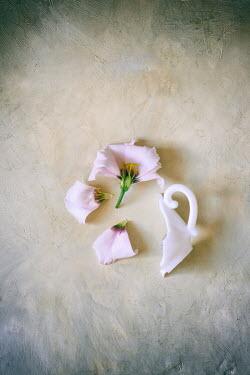Galya Ivanova BROKEN CUP WITH PINK PETALS Flowers