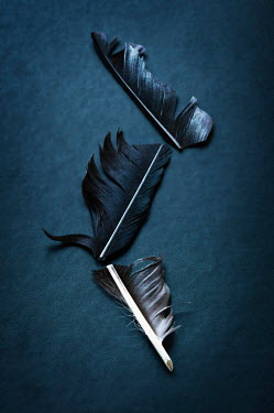 Valentino Sani BROKEN BLACK FEATHER CUT INTO THREE Miscellaneous Objects