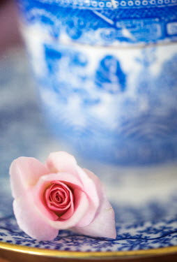 Jill Ferry PINK ROSE BY BLUE AND WHITE CUP AND SAUCER Flowers