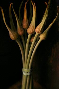 Allan Jenkins BUNCH OF EXOTIC FLOWERS Flowers