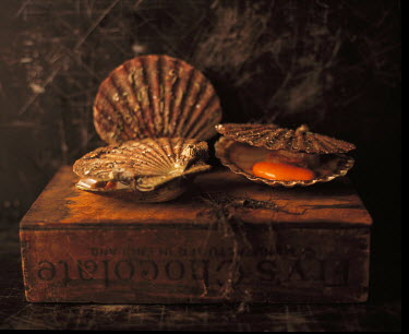 Allan Jenkins SCALLOPS ON OLD WOODEN BOX Miscellaneous Objects