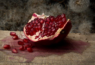 Allan Jenkins JUICY POMEGRANATE WITH DANDELIONS SEEDS Miscellaneous Objects
