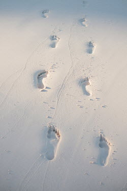 Claire Morgan FOOTPRINTS IN WHITE SAND Seascapes/Beaches