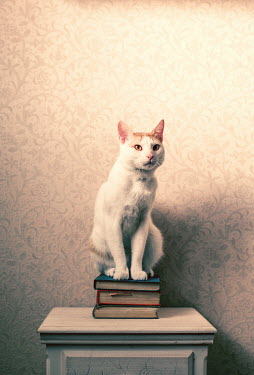 Svetlana Bekyarova WHITE CAT SITTING ON BOOKS Animals