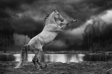 Anna Sychowicz REARING GREY HORSE BY STORMY LAKE Animals