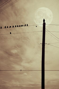 Nicola Smith BIRDS ON TELEGRAPH WIRE WITH MOON Birds