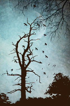 Nicola Smith SILHOUETTE OF TREE WITH BIRDS AND MOON Birds