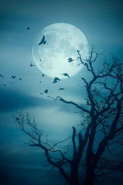 Nicola Smith SILHOUETTES OF BIRDS AND TREE WITH MOON Birds