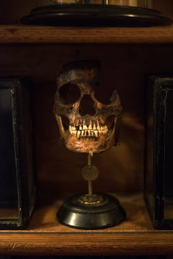 Sylwia Makris OLD SINISTER SKULL ON SHELF Miscellaneous Objects