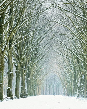 Lars van de Goor MAN IN AVENUE OF TREES IN SNOW Men