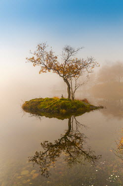 Tim Gartside TREE ON ISLAND IN LAKE Lakes/Rivers