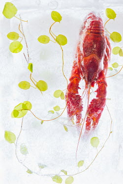 Magdalena Wasiczek LOBSTER AND LEAVES FROZEN IN WATER Fish