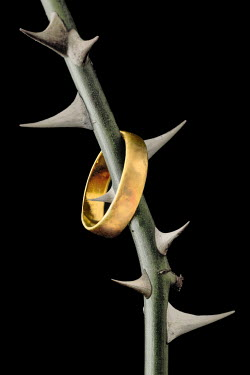 Peter Hatter GOLD WEDDING RING ON THORNY BRANCH Miscellaneous Objects