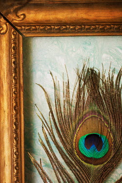 Alison Archinuk PEACOCK FEATHER IN GOLD FRAME Miscellaneous Objects