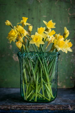 Magdalena Wasiczek DAFFODILS IN GLASS VASE Flowers