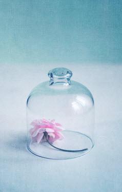 Jill Ferry PINK FLOWER IN GLASS BELL JAR Miscellaneous Objects