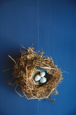 Jan Bickerton BIRDS NEST WITH EGGS AND FEATHER Birds