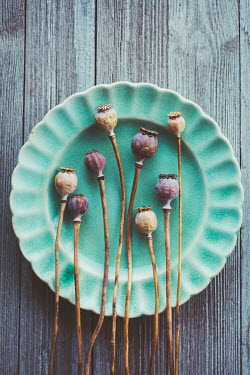 Susan O'Connor POPPY PODS ON TEAL PLATE Flowers