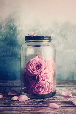 Amy Weiss PINK ROSES IN JAR WITH PETALS Miscellaneous Objects
