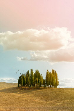 Yolande de Kort CYPRESS TREES IN SUMMERY ITALIAN LANDSCAPE Fields