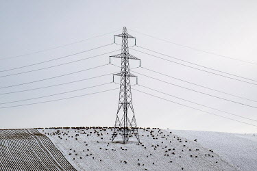 David Baker PYLON IN SNOWY LANDSCAPE WITH BLACK SHEEP Snow/ Ice