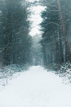 Laura Ranftler SNOWY PATH IN WINTER