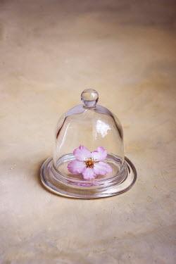 Galya Ivanova BLOSSOM IN BELL JAR Flowers