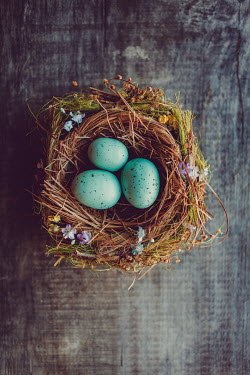 Susan O'Connor DUCK EGGS IN PRETTY NEST Miscellaneous Objects
