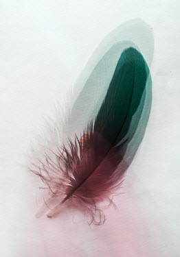 Jaroslaw Blaminsky ABSTRACT FEATHER Miscellaneous Objects