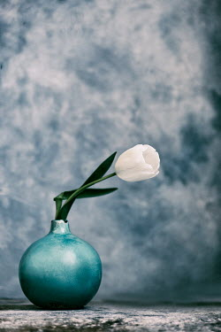Galya Ivanova WHITE TULIP IN BLUE VASE Flowers