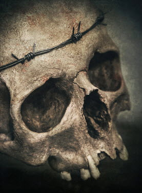 Jaroslaw Blaminsky SKULL WITH BARBED WIRE Miscellaneous Objects
