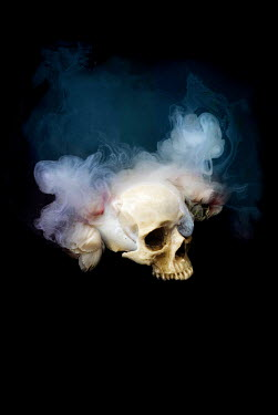 Meg Cowell SKULL WITH MIST AND FLOWERS Miscellaneous Objects