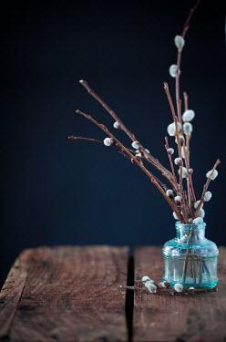 Jean Ladzinski BLOSSOM TWIGS IN GLASS JAR Flowers