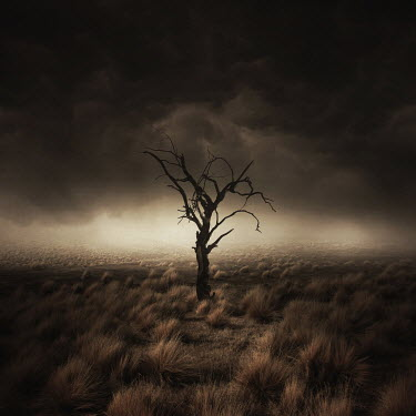 Zoltan Toth WITHERED TREE IN BLEAK LANDSCAPE Fields