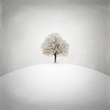Zoltan Toth TREE WITH SNOW ON HILL Trees/Forest