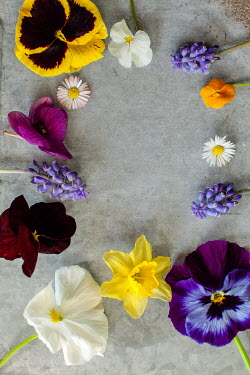 Des Panteva CIRCLE OF MULTICOLOURED FLOWERS Flowers