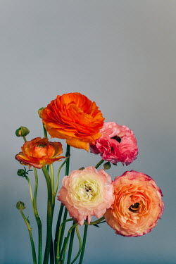 Susan O'Connor CLOSE UP OF PINK AND ORANGE FLOWERS Flowers