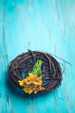 Des Panteva DAFFODILS ON WOODEN WREATH Miscellaneous Objects