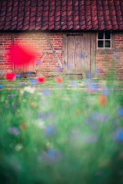 Ysbrand Cosijn FARMHOUSE BEHIND WILD FLOWERS Houses