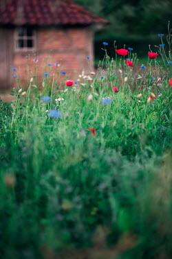 Ysbrand Cosijn GARDEN OF FLOWERS IN COUNTRYSIDE Flowers/Plants