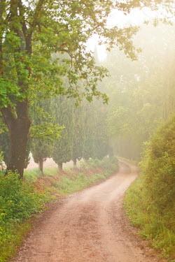 Ildiko Neer TREE LINED ROAD WITH MIST Paths/Tracks