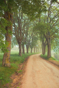 Ildiko Neer TREE LINED ROAD IN COUNTRYSIDE Paths/Tracks