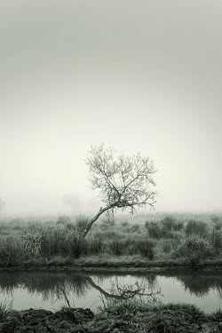 Carmen Spitznagel BENT TREE IN WINTER BY RIVER Lakes/Rivers