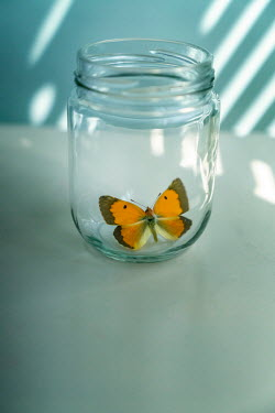 Stephen Mulcahey A butterfly trapped in a glass jar Insects