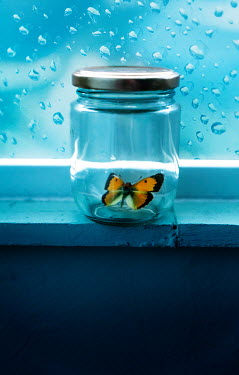 Stephen Mulcahey BUTTERFLY IN JAR BY WINDOW Insects