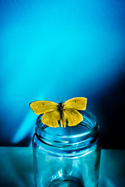 Stephen Mulcahey BUTTERFLY ON GLASS JAR Insects