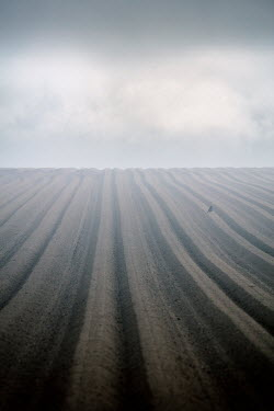 David Baker MISTY PLOUGHED FIELD IN WINTER Fields