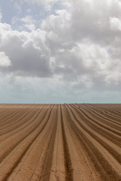 David Baker EMPTY PLOUGHED FIELD WITH CLOUDS Fields